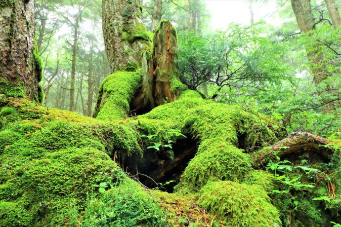 森の基礎知識シリーズ 「原生林」と「自然林」って、どんな森? どう違うの?
