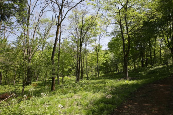 """【""""木""""になるマメ知識】「木の保水力」ってすごい! 私たちの生活を保全する""""自然界のダム"""""""