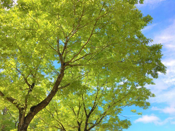 """【""""木""""になるマメ知識】ヒーリングの源、自然が生み出す「1/fゆらぎ」の秘密"""
