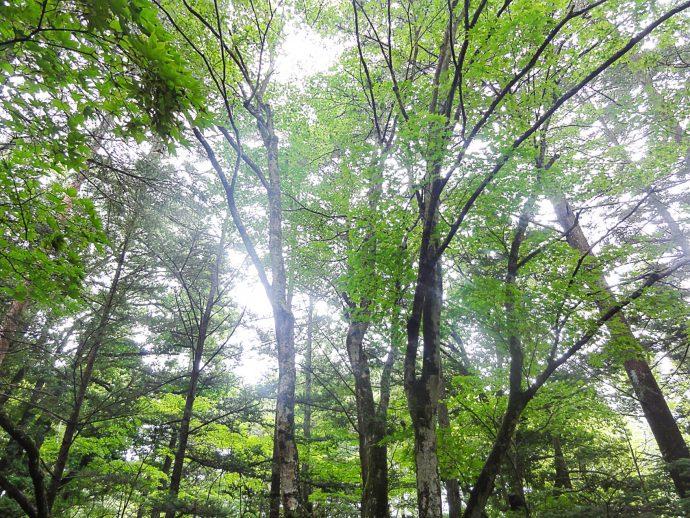 """【""""木""""になるマメ知識】木が自分の身を守る""""フィトンチッド""""の不思議"""