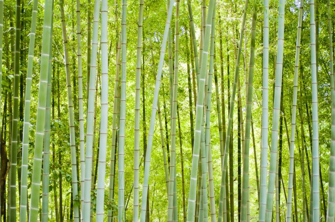 どうしてお正月には門松を飾るの? 門松から考える日本人と竹の関係