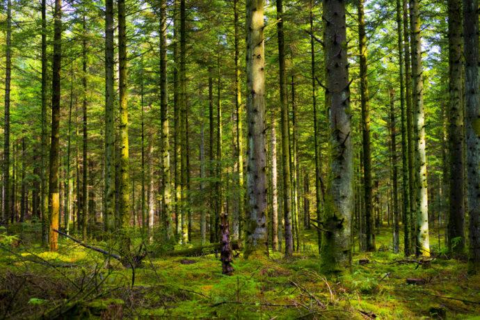 太陽光というエネルギーの恵み-その3「ヒトや植物、地球への恩恵」