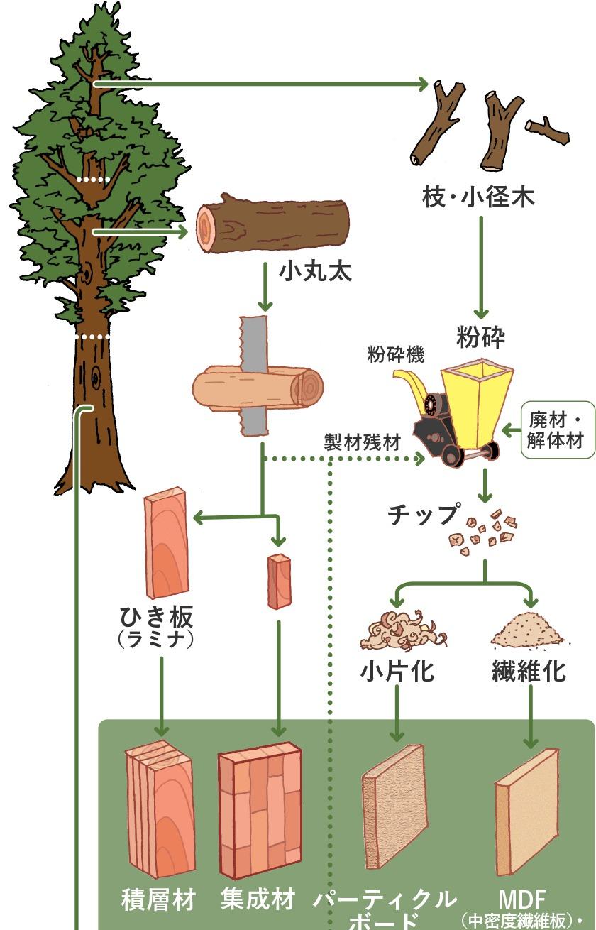 木が木材になるまでのプロセス