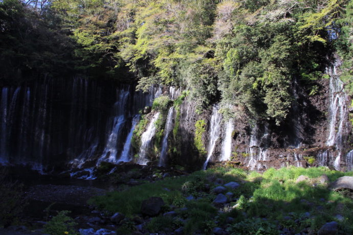 素朴な疑問シリーズ1――森の水は、なぜ美味しい?