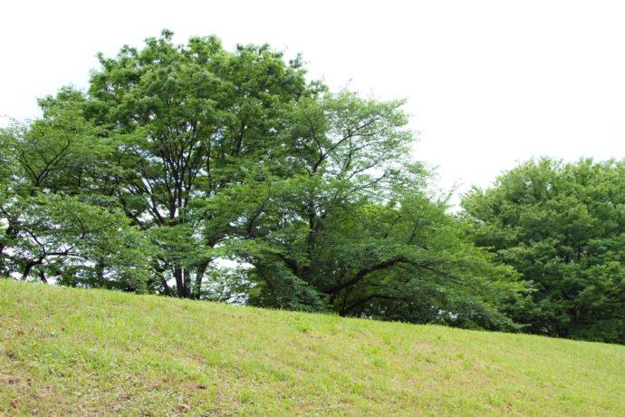 森の基礎知識シリーズ――「広葉樹」と「針葉樹」はどう違うの?
