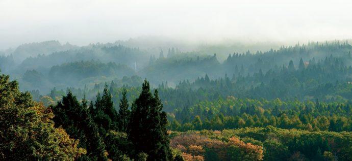 """地域の森を守る """"森林環境譲与税"""""""