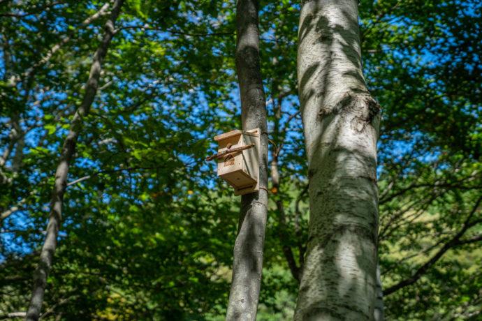 森の魅力づくりで地域活性