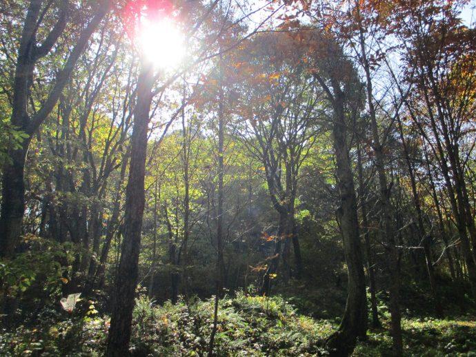 """【""""木""""になるマメ知識】生き残りをかけて繰り広げられる「森林の闘争劇」"""