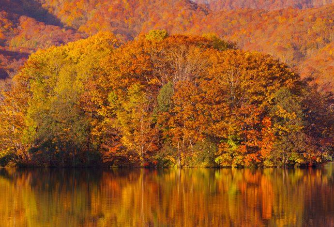 紅葉の秘密を知りたい! 深緑の葉が色とりどりに変わるワケ