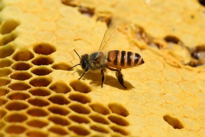 """森の木々や草花の蜜を集める""""ミツバチ""""と""""ハチミツ""""の秘密"""