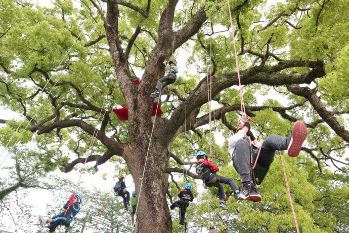 別世界広がる樹上へGO! 「ツリークライミング」で森を楽しむ